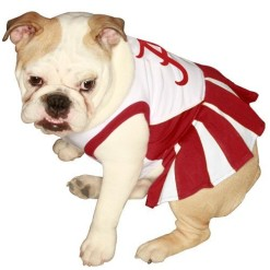 Alabama Crimson Tide dog cheerleader dress on pet