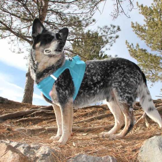 Baby Blue American River Ultra Choke Free Dog Harness