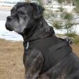 Black American River Ultra Choke Free Dog Harness