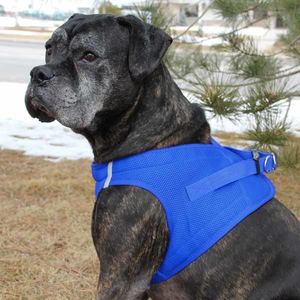American River Dog Harness Reviews