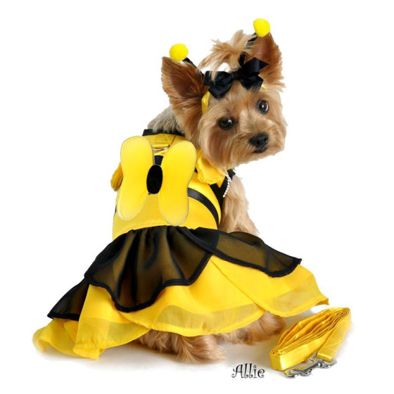 Bumblebee Dog Halloween Costume