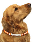 Clemson Tigers leather dog collar on pet