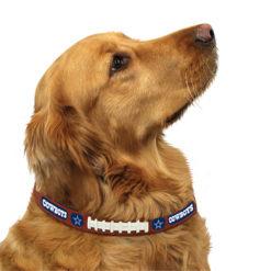 Dallas Cowboys Leather dog collar on pet