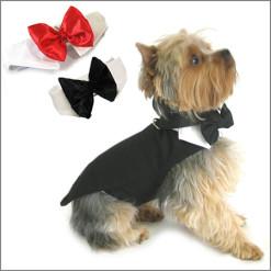 Dog Wedding/Formal Wear
