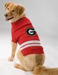 Georgia Turtleneck dog sweater on pet
