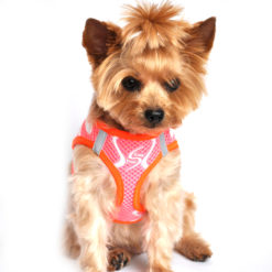 Iridescent Pink American River Dog Harness on pet