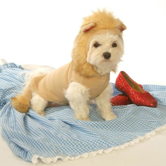 Lion Dog Costume with Faux Fur