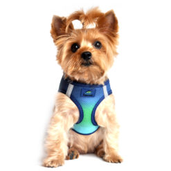 Northern Lights American River Dog Harness