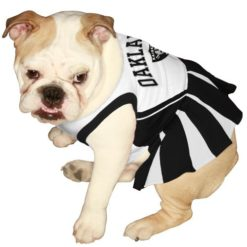 Oakland Raiders NFL dog cheerleader dress on pet