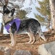 Purple American River Ultra Choke Free Dog Harness