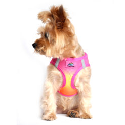 Raspberry Pink & Orange American River Ultra Choke Free Dog Harness on pet