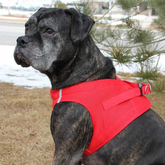 Red American River Ultra Choke Free Dog Harness