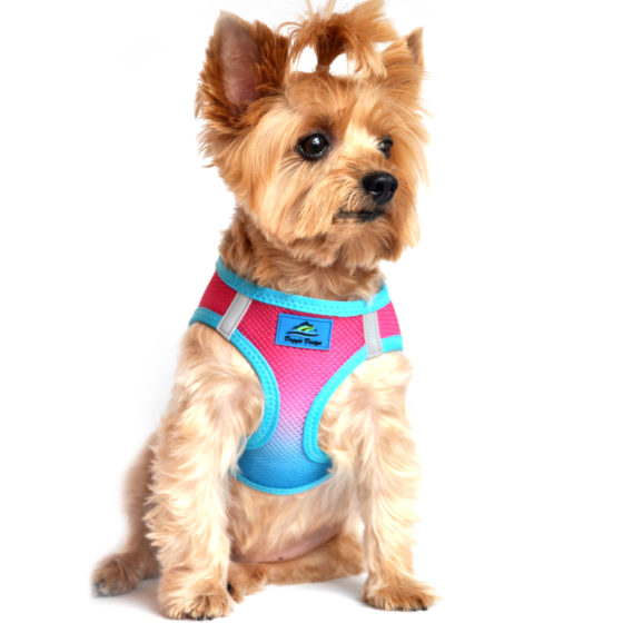 Sugar Plum American River Dog Harness