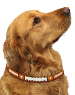 Texas Longhorns leather dog collar on pet