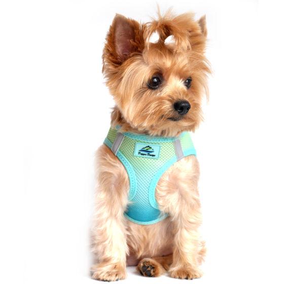 Aruba Blue American River Dog Harness