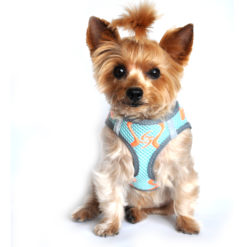 Aruba Blue American River Sport Dog Harness
