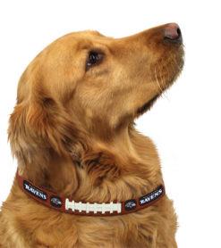 Baltimore Ravens leather dog collar on pet