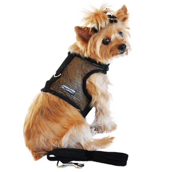 Black Cool Mesh Dog Harness on dog