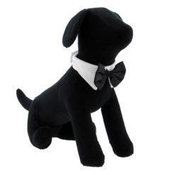 Black Satin Dog Bow Tie on Pet