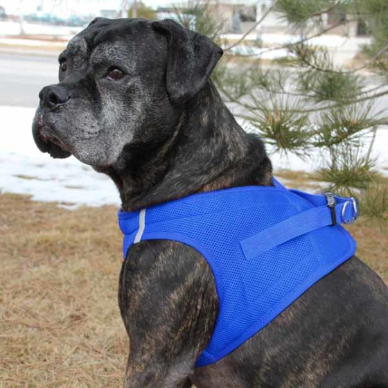 Blue American River Ultra Choke Free Dog Harness