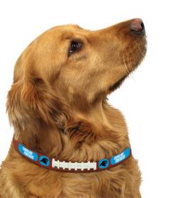 Carolina Panthers leather dog collar on pet