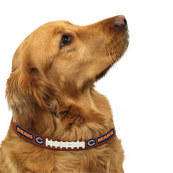 Chicago Bears leather dog collar on pet