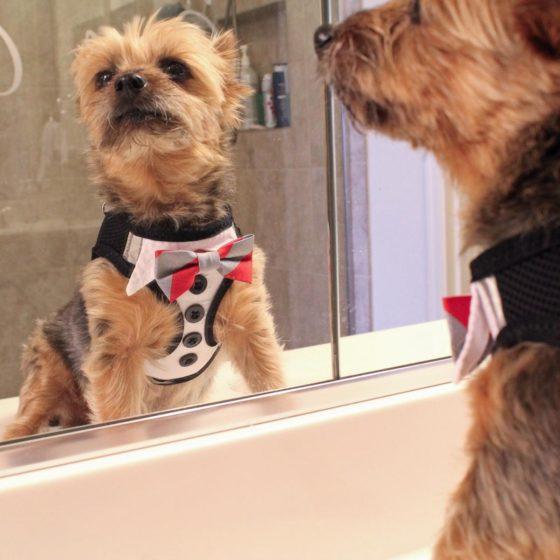 Dog Tuxedo American River Harness