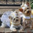 Fairy Dog Dress with Wings