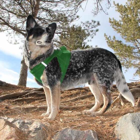Green American River Ultra Choke Free Dog Harness