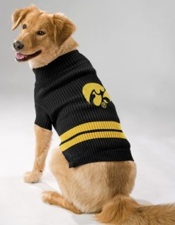Iowa Hawkeyes NCAA dog sweater on pet