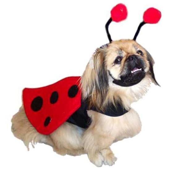 Ladybug Dog Costume Harness with Wings, Antennae & Leash