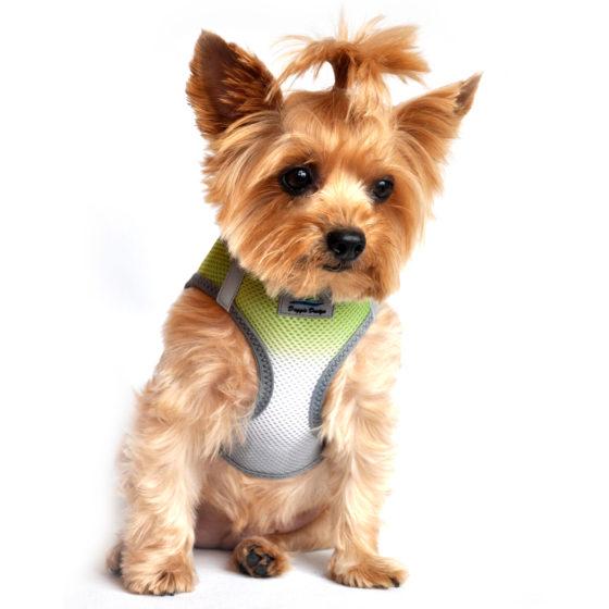 Limestone Gray ombre American River Dog Harness