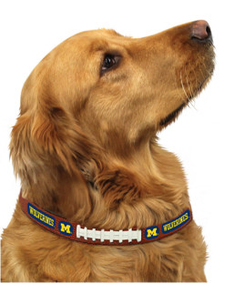 Michigan Wolverines NCAA leather dog collar on pet