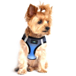 Midnight Sky American River Harness