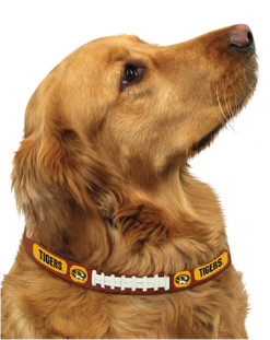 Missouri Tigers NCAA leather dog collar on pet