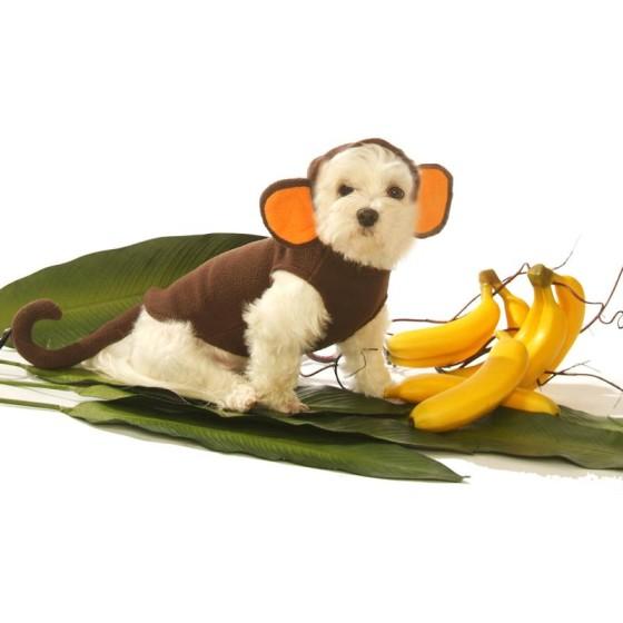 Monkey Dog Costume
