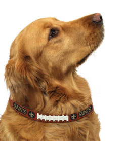 New Orleans Saints leather dog collar on pet