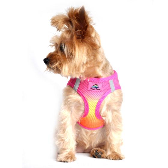 Raspberry Pink & Orange American River Ultra Choke Free Dog Harness on pet