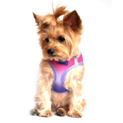 Raspberry Sundae American River Ultra Choke Free Dog Harness on pet